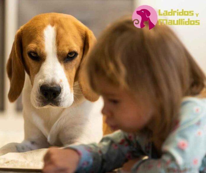 mejores razas de perros para niños