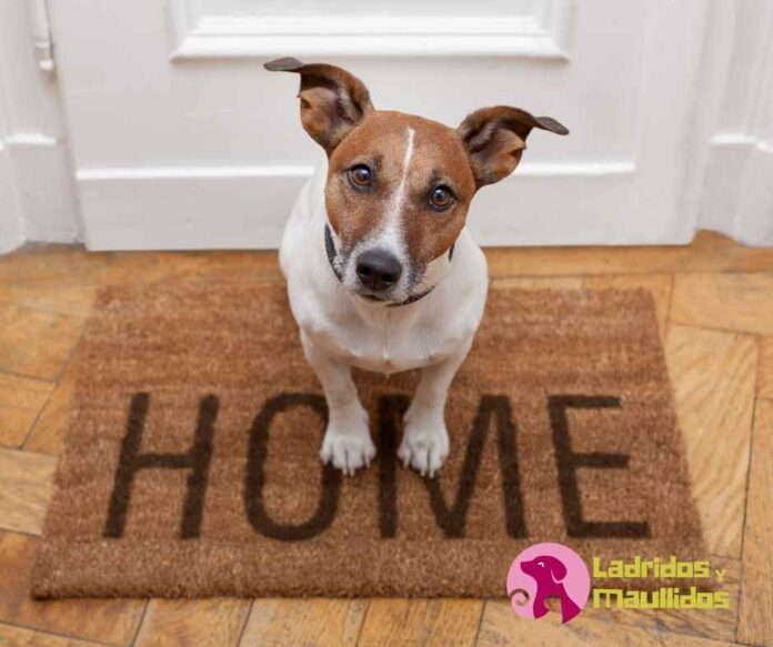 mejores perros para tener en casa