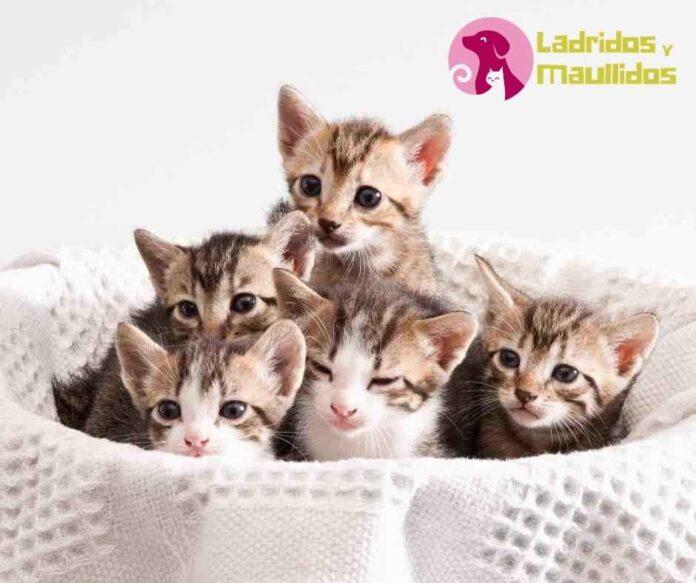 como cuidar a un gato recien nacido