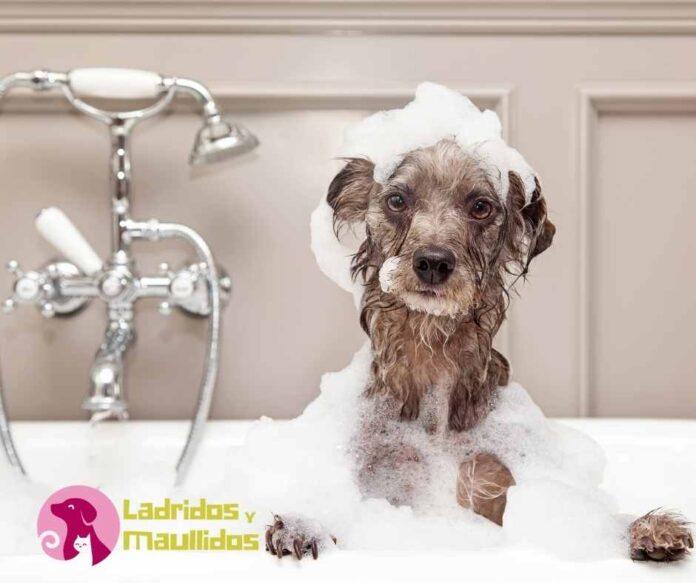 Puedo bañar a un perro con shampoo de personas